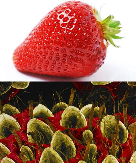 fruit a microscope quot put a strawberry an electron microscope and