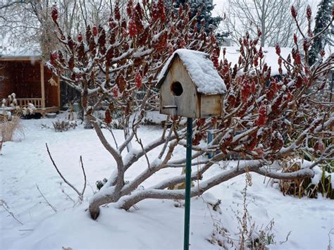 Backyard Winter Gardening by Six Winter Garden Chores