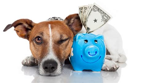 how much does a dog house cost 19 clever tips on how to save and budget for general dog costs