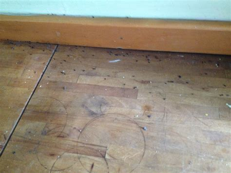 bed bugs halifax mice bedbugs and other luxuries of student living in