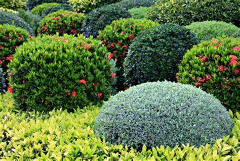 best shrubs bushes landscaping designs ideas pictur