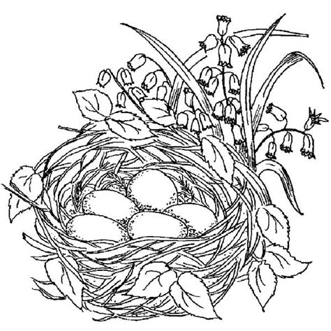 Coloring Page Nest by Empty Bird Nest Coloring Page