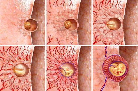 Genetika Tumbuhan L V Crowder biologi gonzaga hormon dari placenta