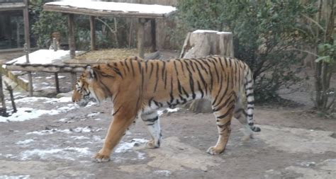 un zoo en hiver 2203020997 amn 233 ville un zoo en hiver