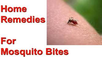home remedies for mosquito bites 9 simple remedies against mosquito bites