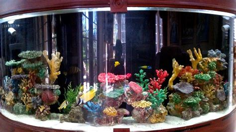 beautiful home fish tanks most beautiful saltwater fish tanks all time