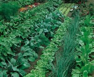 beautiful vegetable garden pictures png hi res 720p hd
