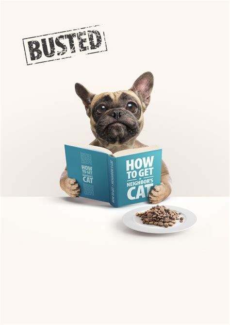 witty cat food 128 best images about pet business graphic design on