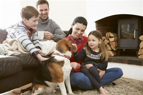 how to teach your dog to stay off the couch teach your dog the quot off quot command dog training nation