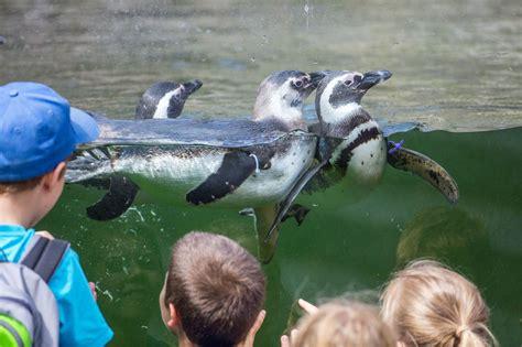 Zoologischer Garten In Karlsruhe zoologischer stadtgarten karlsruhe urlaubsland baden