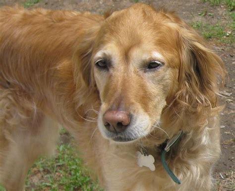 leash aggression in dogs leash aggression thatmutt a
