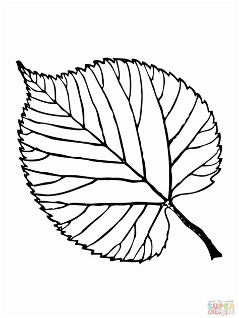 leaf identification coloring pages leaf outline printable coloring home