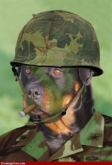 do rottweilers locking jaws 17 best images about rottie on best dogs service dogs and rottweiler
