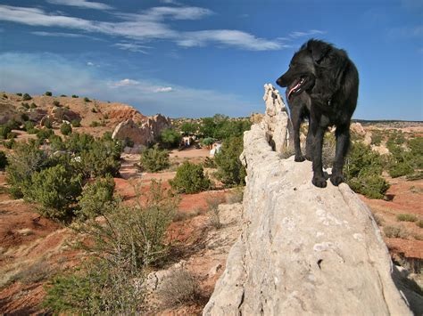 the of a earth day in the garden of the gods travels with the coyote