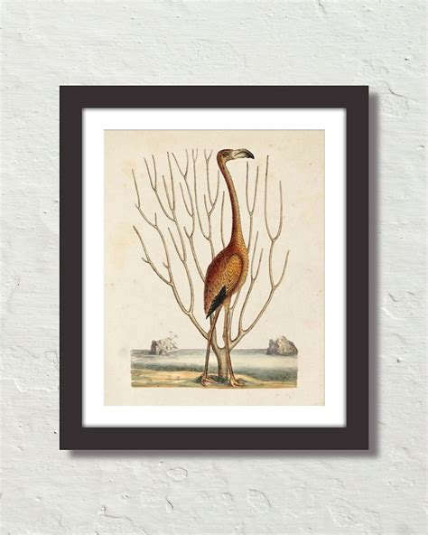natural history painting 1906388490 vintage sea bird no 15 natural history art print belle maison art