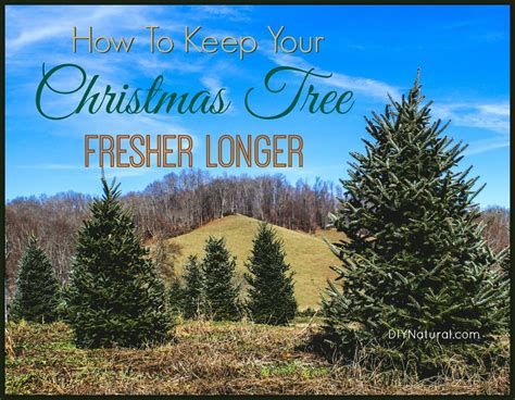 how to keep a tree fresh