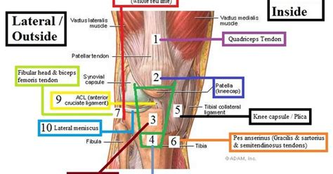 knee pain after c section knee pain and injuries are common among weightlifters and