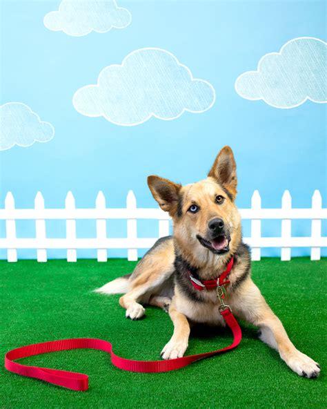 puppy manners park etiquette 6 key park manners pawsh magazine