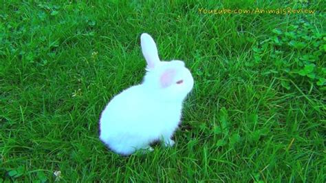 Bantal Peyang Baby Rabbit Blue white baby rabbit with www pixshark images galleries with a bite
