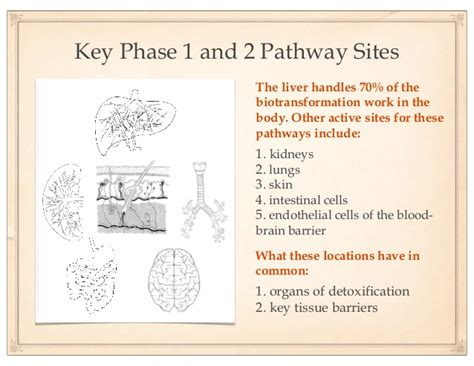 Phase 1 And Phase 2 Liver Detox by Detoxification
