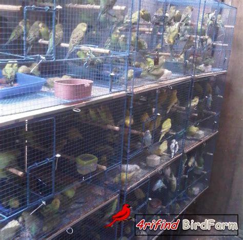 Nomor Rumah Burung Pesanan Khusus kicau mania