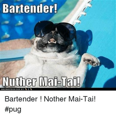 ihasahotdog pug 25 best memes about ihasahotdog ihasahotdog memes
