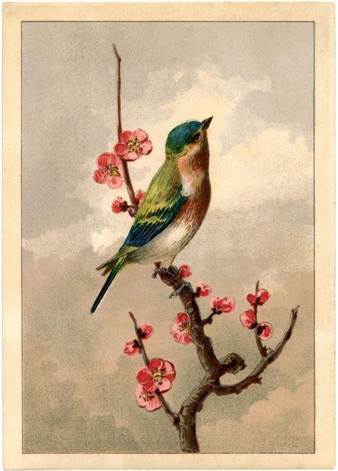 vintage bird tattoo designs best 20 vintage images ideas on ephemera