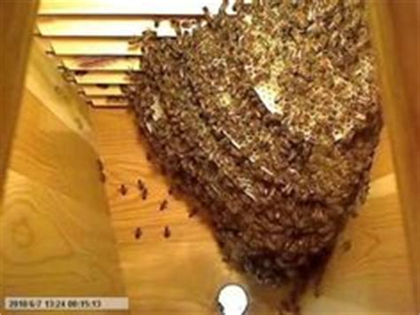 top bar hives in cold climates 1000 images about top bar bees on pinterest top bar hive bee hives and beehive