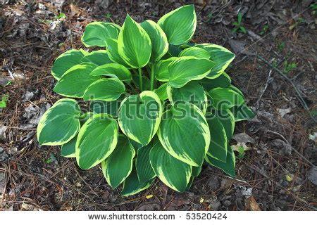 plants that need little sunlight plants that need very little sunlight 8 low maintenance