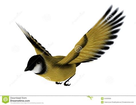 Houseplans by Flying Goldfinch Royalty Free Stock Image Image 34393906