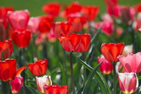 100 flowers images download free images on unsplash