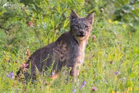 image gallery manitoba wildlife