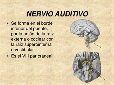 nervio vestibular ppt nervio auditivo viii powerpoint presentation id