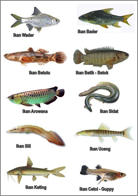 Alat Pancing Ikan Air Tawar macam macam jenis jenis dan nama alat musik tradisional loak info