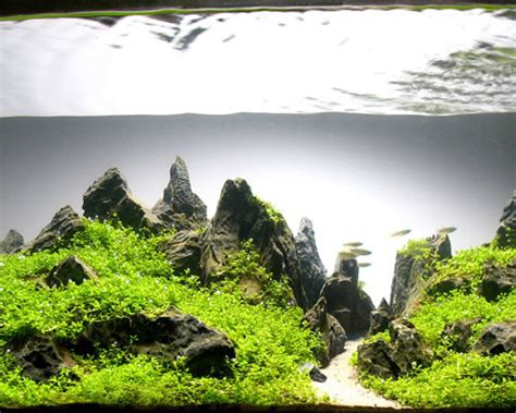Award Winning Aquascapes by Not Your Typical Fish Tank Anymore