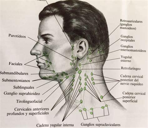 cuales son las cadenas ganglionares del cuello pediatra en granada he notado bultos en el cuello 191 ganglios