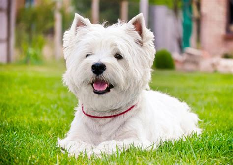 are for dogs 5 kinds of dogs who are most at risk for sun damage