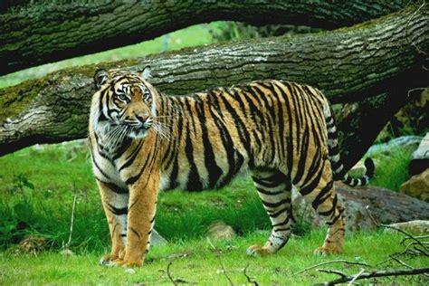 wallpaper alam dan hewan tubuh hewan dan tumbuhan rangkuman pengetahuan alam
