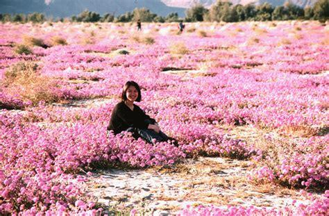 flowers anza borrego 阿姗影记 photologue march 1998