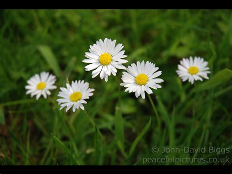 wallpaper for desktop background free download wallpaper desktop free download wallpaperpool