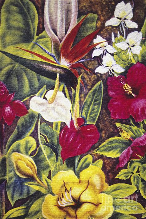 Tropical Pattern Curtains Vintage Tropical Flowers Painting By Hawaiian Legacy