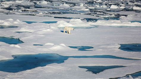 arctic sea arctic sea once again shows considerable melting