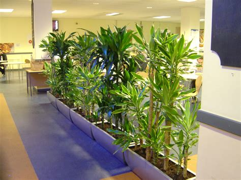 interior plant skyline office design office plants plants for hire