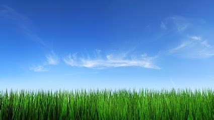 gras himmel grass and the sky background free stock photos