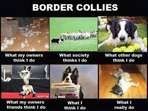 Jilbab Java Seven Arf 004 78 best images about border collie on folk print and border collie pups