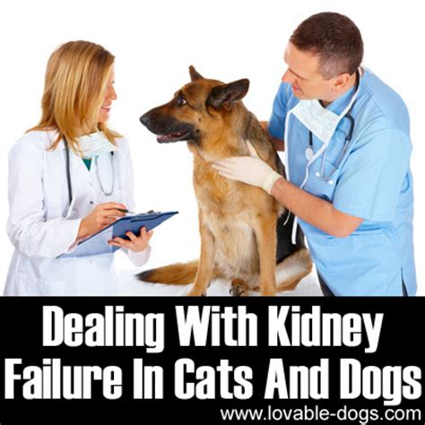 kidney failure in puppies lovable dogs dealing with kidney failure in cats and dogs lovable dogs