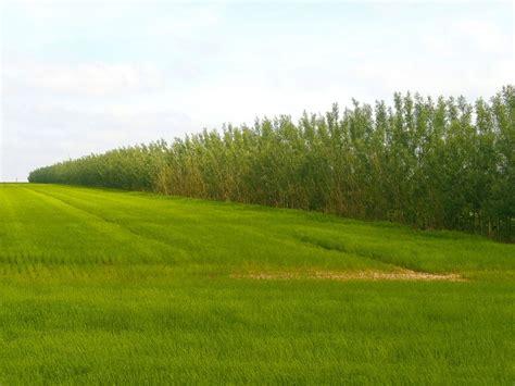 chambre d agriculture 48 bandes ligno cellulosiques rentabiliser la protection de