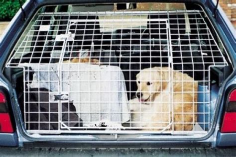 Hundetransport Auto by Hundetransport Im Auto Bilder Autobild De