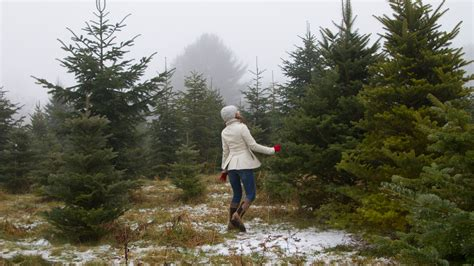 christmas tree cutting near me where to cut a tree near mecut a tree near me tag 14 cut