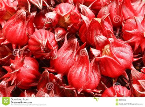 Bionic Farm Rosella Herbal Tea roselle fruits stock photography image 36223852